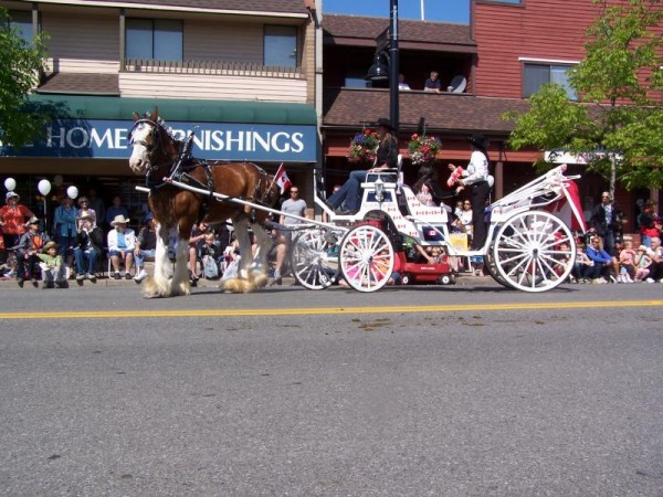 Cloverdale rodeo parade 1