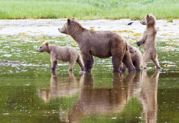 Best Places to Spot Wildlife in British Columbia