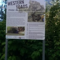Western Toad sign at Summit Lake