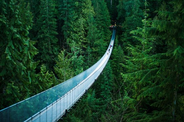 Capilano Suspension Bridge by Michelle Lee