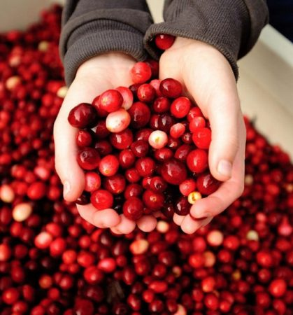 Cranberry Festival in Fort Langley