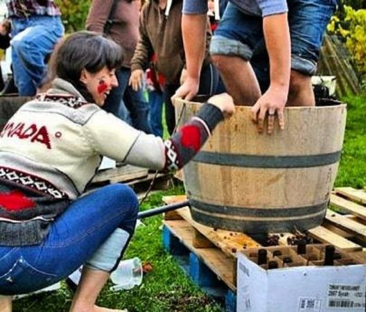 Grape Stomping at Township 7 Winery, Langley
