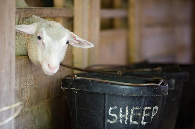 Maplewood Farm Photo: Kenny Louie via Flckr