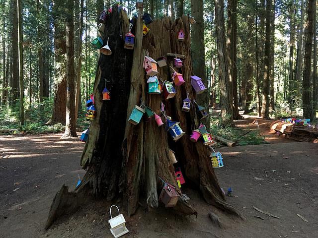 Redwood Park Photo: Alan Levine via Flickr