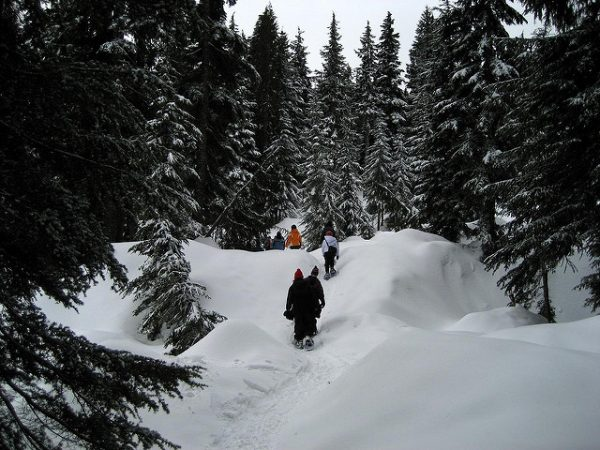 Snowshoeing at Mount Seymour, North Vancouver. Photo: selihpxe8 via Flickr