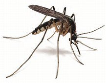 Mosquito…..help? Ideas to combat the pesky bug!
