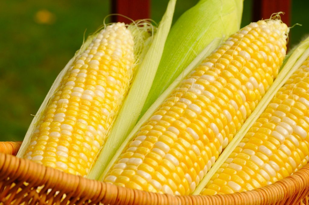 A basket of sweet corn.