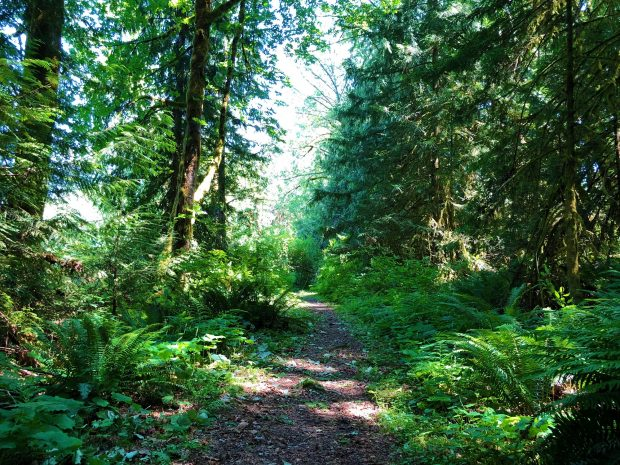 A nature trail at the Beaver Lake Resort in Lake Cowichan.