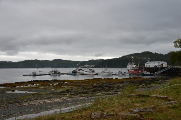 Port Hardy Harbour | Kim Campbell-Walker