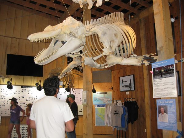 Whale Interpretive Centre | Kim Campbell-Walker
