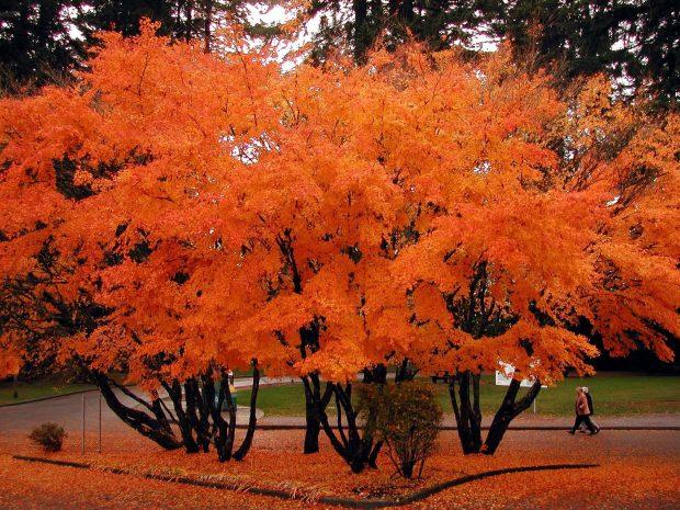 Capilano River Rgional Park, North Vancouver Photo Don
