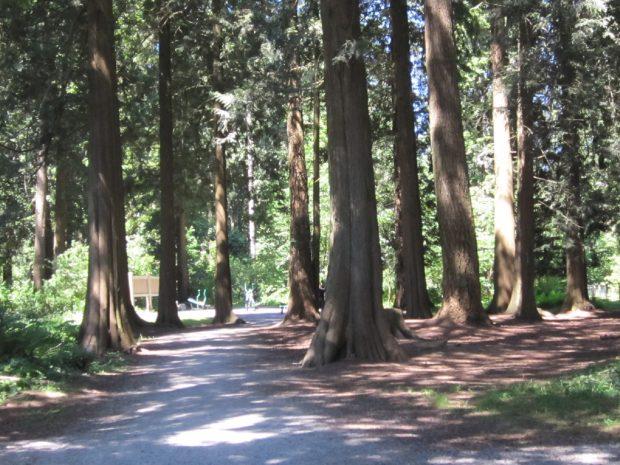 Hoffman Park, Pitt Meadows