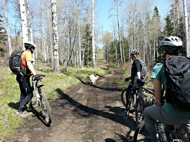 Lundbom Mountain Bike Trail, Merritt Photo: Kim Walker
