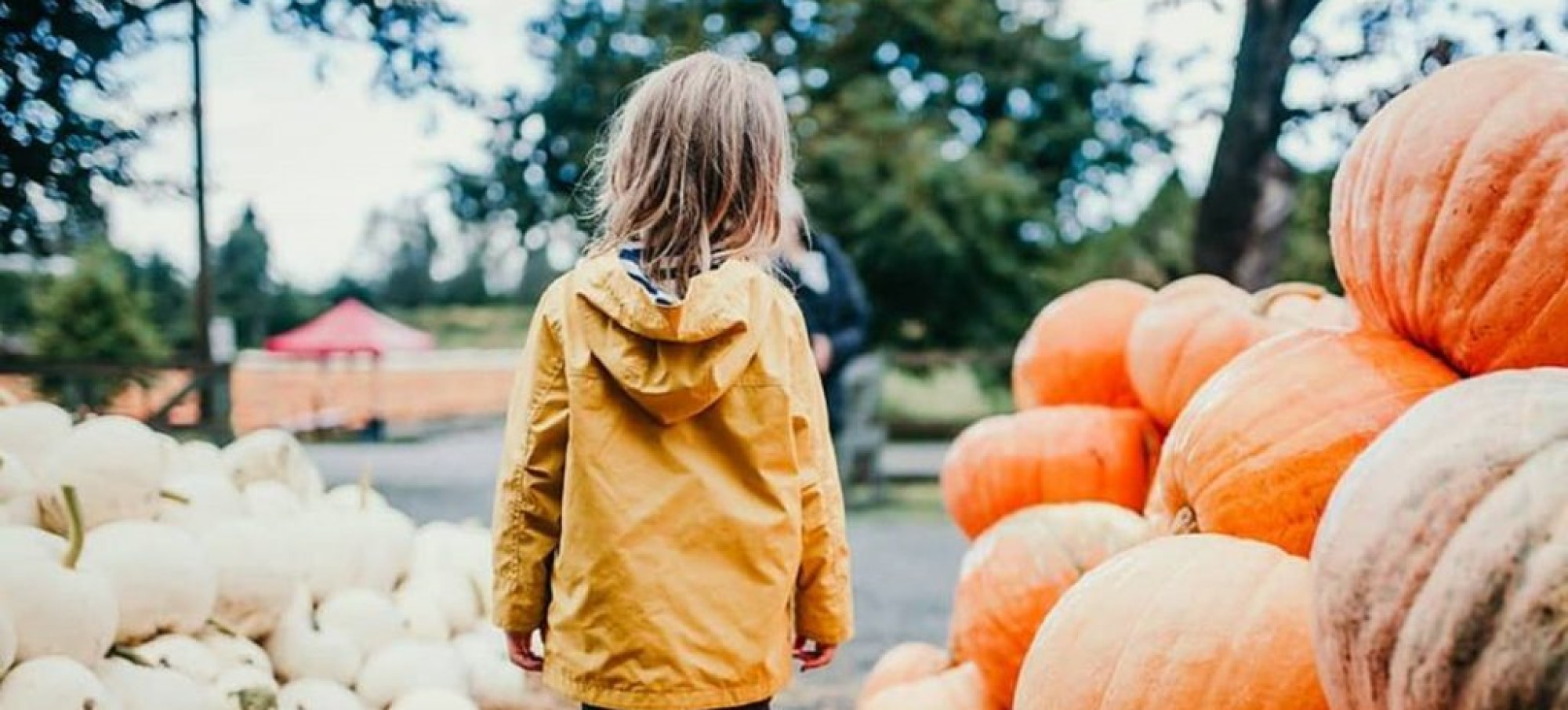 Celebrate the Fall at 4 Fraser Valley, BC Festivals