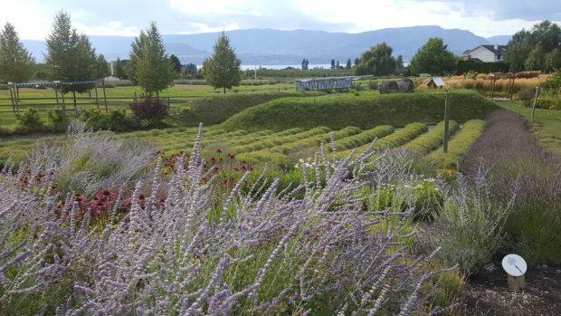 Okanagan Lavender & Herb Farm, Kelowna