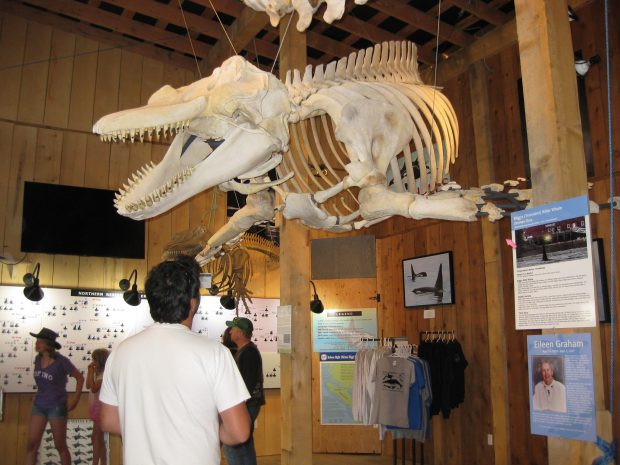 Whale Interpretive Centre, Telegraph Cove Photo Kim Walker